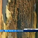 Bees turn part of house into big hive