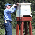 Charlie Brandts, White House Beekeeper